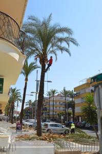 Trabajos de poda en la avenida Andalucía de Punta Umbría.