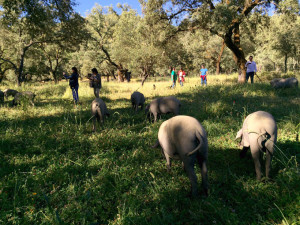Los periodistas conocieron el proceso de crianza del cerdo.
