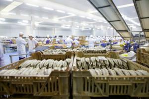 Tres empresas onubenses están avaladas por el IGP de la Caballa y la Melva.