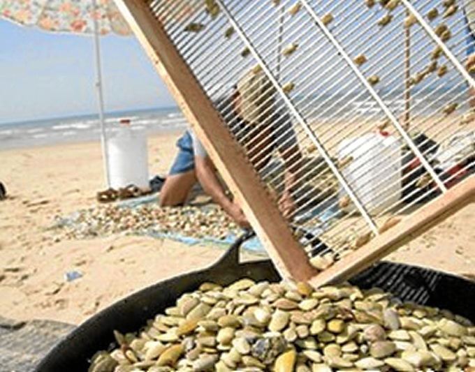 Los análisis del Laboratorio de Control de Calidad de los Recursos Pesqueros constatan la ausencia de la biotoxina DSP en estas aguas.
