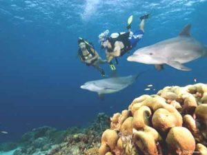 El fondo marino onubense también cuenta con gran riqueza. / Foto: forocoches.