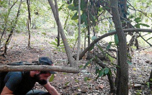 En Cortegana se podrá estudiar Técnico Superior en Gestión Forestal y del Medio Natural