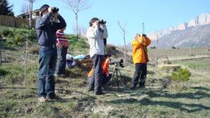 Visita al Pirineo  catalán para el avistamiento de quebrantahuesos, especie de buitre carroñero en peligro de extinción.