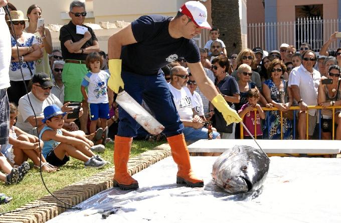 La plaza de la Almadraba de la Barriada isleña de Punta del Caimán acogía ayer,como viene siendo habitual, el ronqueo de un atún en directo.