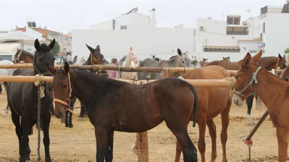 La Feria Ganadera de Bollullos incrementa casi en un 50% su número de equinos
