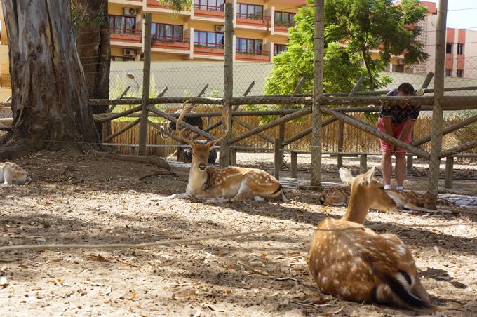 Animales en el parque Prudencio Navarro de Ayamonte.