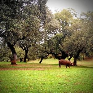 La Guía Repsol dedica un amplio reportaje a la Ruta del Jamón de Jabugo