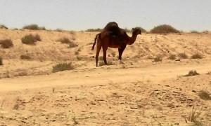 Su rutina diaria está en el desierto.