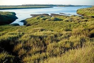 En los estuarios del Tinto y el Odiel se configura el Paraje Natural de Marismas del Odiel.