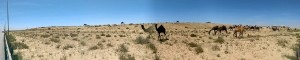 Otra imagen del desierto.