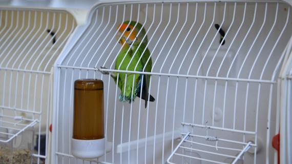 El X Concurso Ornitológico de Ayamonte cierra con gran éxito de visitantes