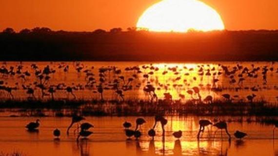 Doñana se ratifica como Patrimonio de la Humanidad y abre camino a otros espacios onubenses
