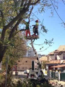 Campaña de poda en Huelva capital.