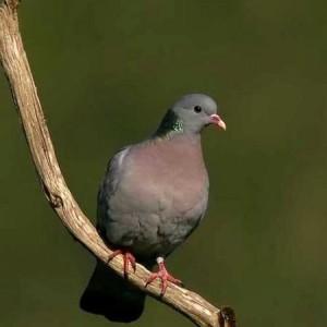 El columbario estuvo habitado por palomas zuritas. / Foto: seo.com