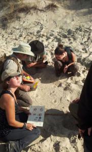 Galán en Doñana interpretando unas huellas en la arena.