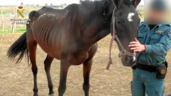 Imputada una persona por maltrato animal en Huelva