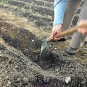 Cultivo de la huerta como herramienta terapeútica. /Foto: www.tomatesfelices.es