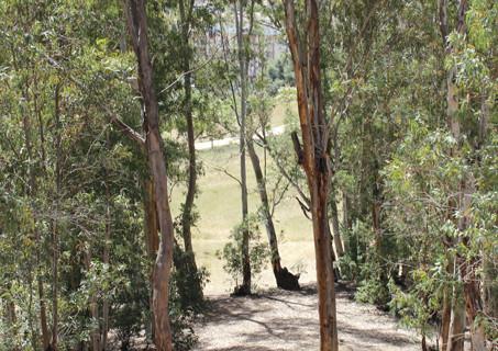 Jornada de reforestación en el Parque Moret abierta a la ciudadanía