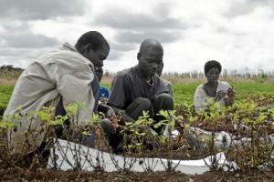 El proyecto pretende mejorar la calidad de vida en Malawi.