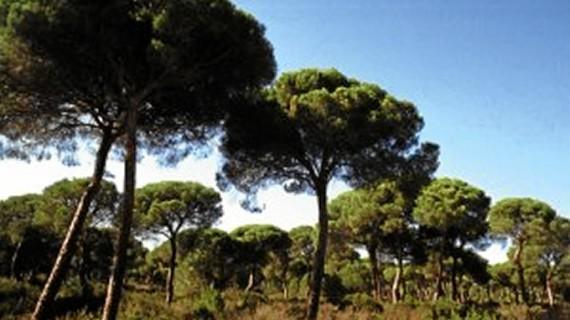 La carretera Almonte-Matalascañas, en estudio y planificación para su mejora permanente