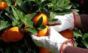 Abierta una nueva convocatoria de ayudas para los productores afectados por el veto ruso