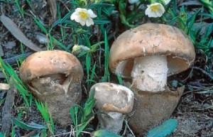 Se pide garantizar un aprovechamiento sostenible del recurso micológico.