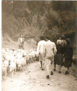 Años cuarenta del siglo pasado: Un rebaño de ovejas, al cuido de su pastor, se dirige desde el Conquero al centro de la ciudad ante los ojos atónitos de varios transeúntes que se han aventurado por aquellos lares