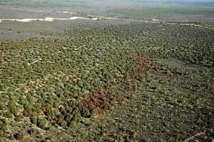 Ecosistema Monte Blanco de Doñana.
