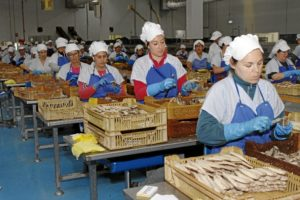 De los productos elaborados comercializados por Usisa destacan los filetes de Caballa y Melva, amparados por las Indicaciones Geográficas Protegidas Caballa y Melva de Andalucía. / Foto: José Rodríguez.