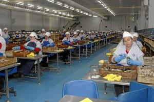 Se trata de una empresa de referencia en el sector de las conservas de pescado y salazones. / Foto: José Rodríguez.