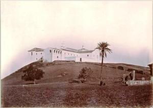 Esta imagen, de 1875, es la más antigua conocida de la Palmera de Colón