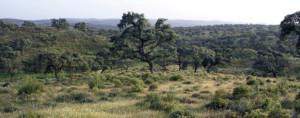 Imagen de la finca en la que se encuentra situado este yacimiento. / Foto: Catálogo exposición 'El Megalitismo en Huelva'.