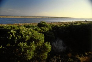 Una bella imagen de las Marismas del Río Piedras. / Foto: andalucia.org