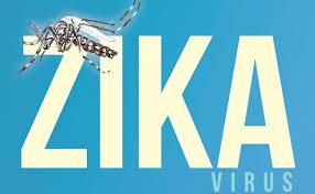 Este mosquito provoca el virus del zika.