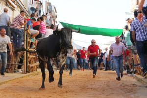 Una de las vaquillas se dirige al chiquero de la Plaza