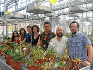 Equipo de investigación de la Universidad de Sevilla que persigue la conservación de un clavel autóctono del entorno de Doñana.