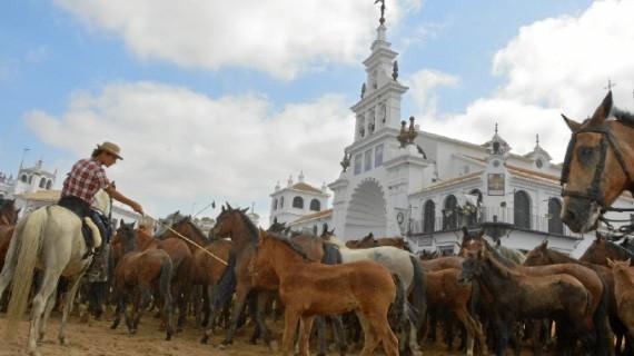 El mundo ganadero vive intensamente la Feria de Almonte