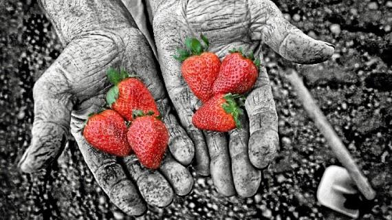 La Comunidad de Regantes  Palos abre la muestra del Concurso 'Agua y Agricultura de los Frutos Rojos'