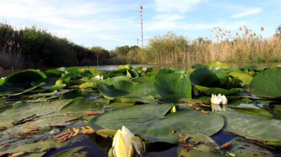 Un total de 16 especies de flora amenazada prosperan con éxito en la Laguna Primera de Palos