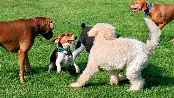 El Ayuntamiento refuerza la lucha contra los excrementos caninos ampliando medidas para evitar también las manchas y los malos olores