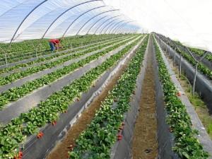 Los agricultores onubenses son innovadores en la búsqueda de nuevos productos.