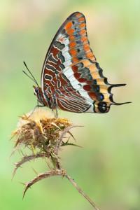 Entre 2009 y 2011 estuvo realizando con otros fotógrafos imágenes de mariposas de Huelva con el objetivo de hacer un libro que finalmente no vio la luz.