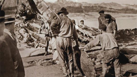 La pesca de ballenas, una actividad desconocida de la Huelva de los años veinte