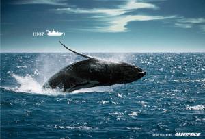 La caza de ballenas fue una práctica habitual en el mundo durante los años treinta. / Foto: taringa.net
