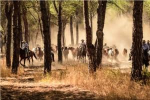 Los ganaderos de Hinojos trasladan las yeguas hasta la localidad.