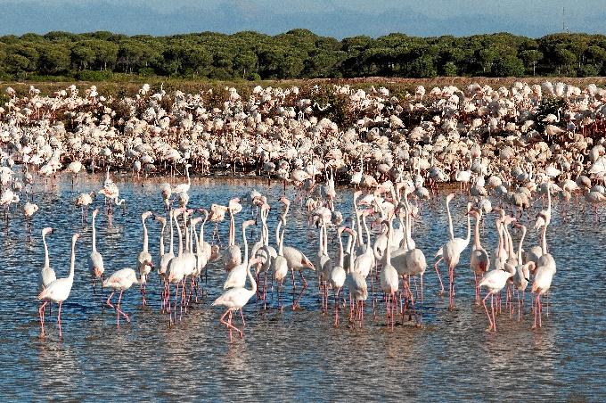 Huelva organiza un amplio programa para celebrar en Huelva el Día Mundial de las Aves.