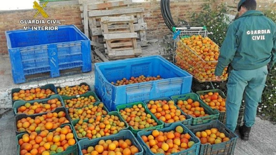 Intervenidos alrededor de 500 kilos de naranjas y mandarinas