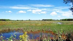 Imagen del Acebuche (Doñana), donde hubo otro centro dedicado al estudio del eucalipto. / Foto: noticias.eltiempo.es