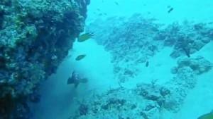 Una bella imagen del fondo marino en el Estrecho de Gibraltar. / Foto: youtube.com