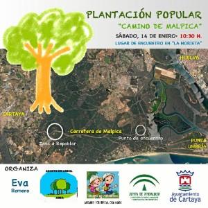 La plantación tendrá lugar el próximo sábado 14 de enero.